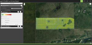canola field in skyclaim app